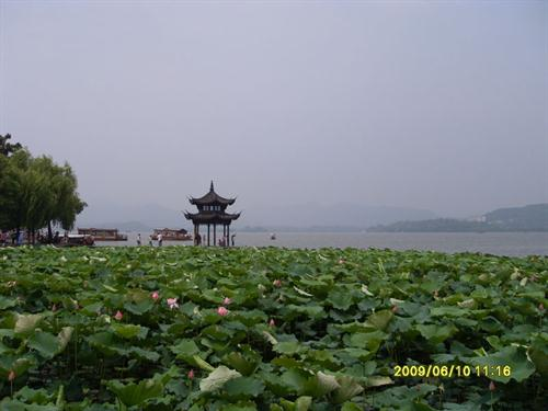 Water lilies bloom to greet summer in Hangzhou