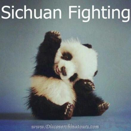 Panda Sichuan Fighting