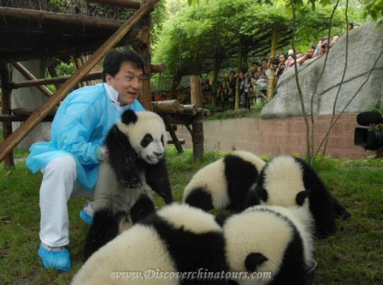 Adoption Giant Pandas from Chengdu Research Base of Giant Panda Breeding