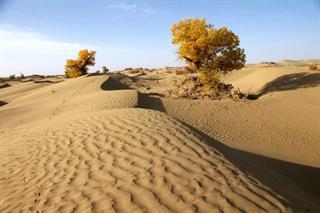 15 Days Taklamakan Desert Trekking Tour