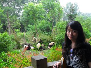 Half Day Sichuan Chengdu Private Tour A--Giant Panda Breeding Tour