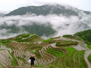 1Day Guilin Bus Tour--Dragon's Backbone Rice Fields Tour