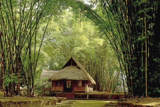 Mangbanaxi Bamboo Grove and wooden houses